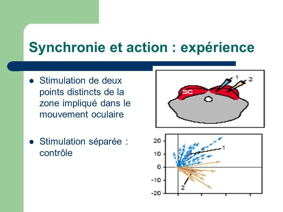 Synchronie et action : expérience