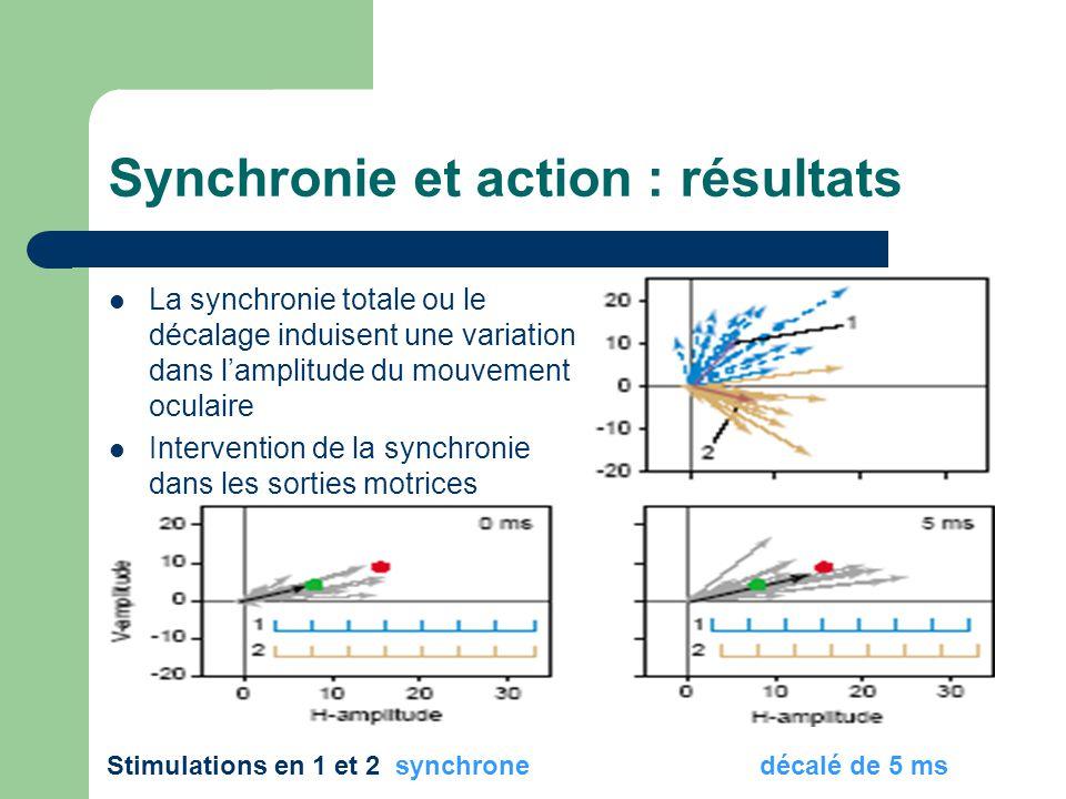 Synchronie et action : résultats
