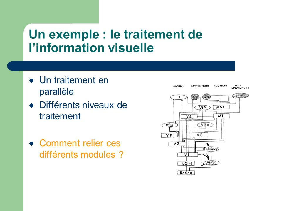 Un exemple : le traitement de l'information visuelle