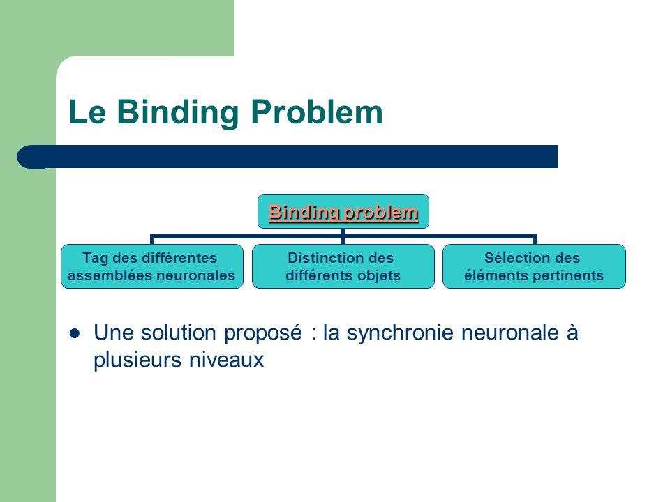 Le Binding Problem Une solution proposé : la synchronie neuronale à plusieurs niveaux