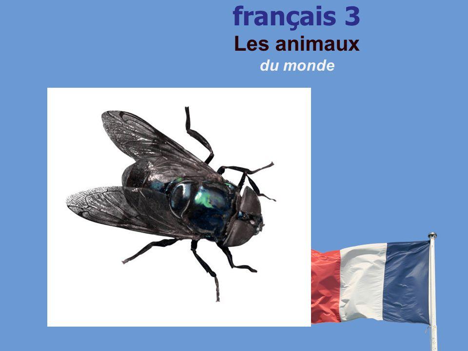 français 3 Les animaux du monde