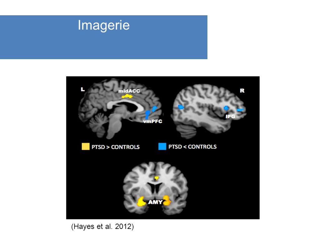 () Imagerie (Hayes et al. 2012)