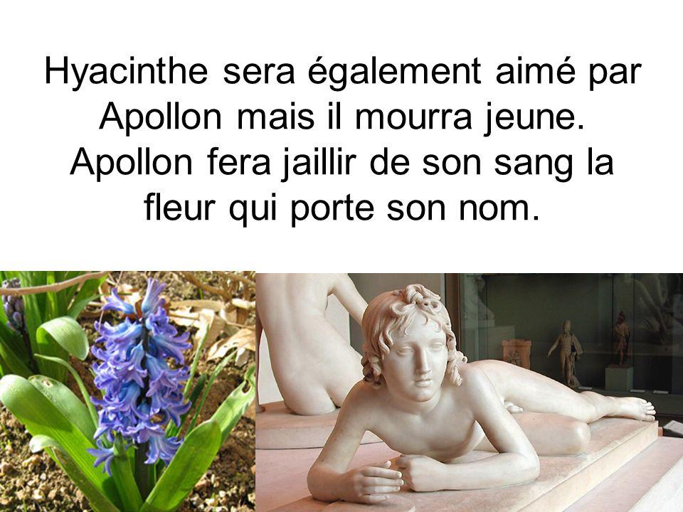 Hyacinthe sera également aimé par Apollon mais il mourra jeune