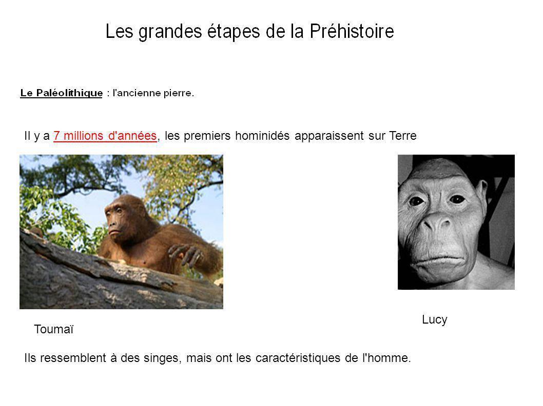Il y a 7 millions d années, les premiers hominidés apparaissent sur Terre