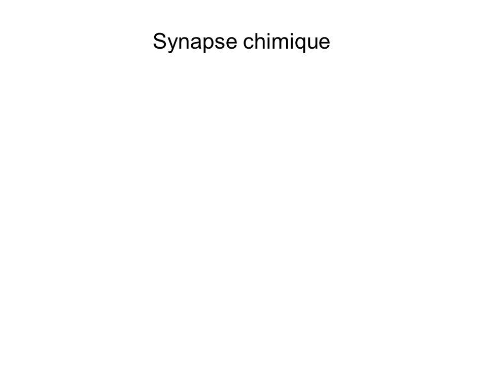 Synapse chimique