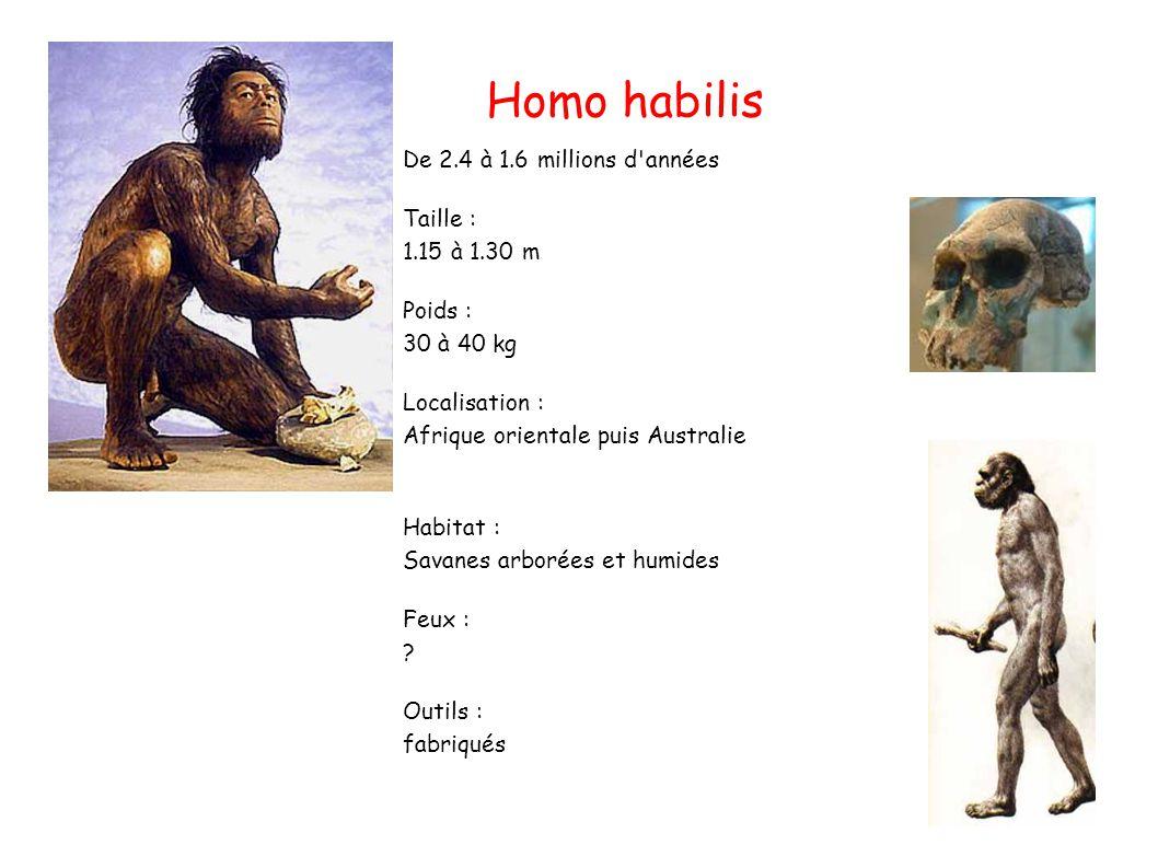 Homo habilis De 2.4 à 1.6 millions d années Taille : 1.15 à 1.30 m