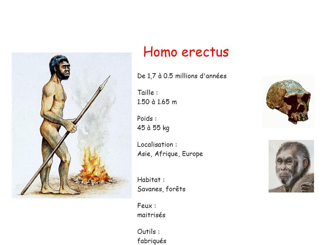 Homo erectus De 1,7 à 0.5 millions d années Taille : 1.50 à 1.65 m