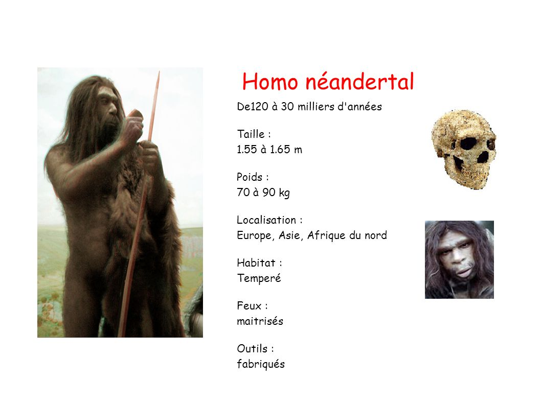 Homo néandertal De120 à 30 milliers d années Taille : 1.55 à 1.65 m
