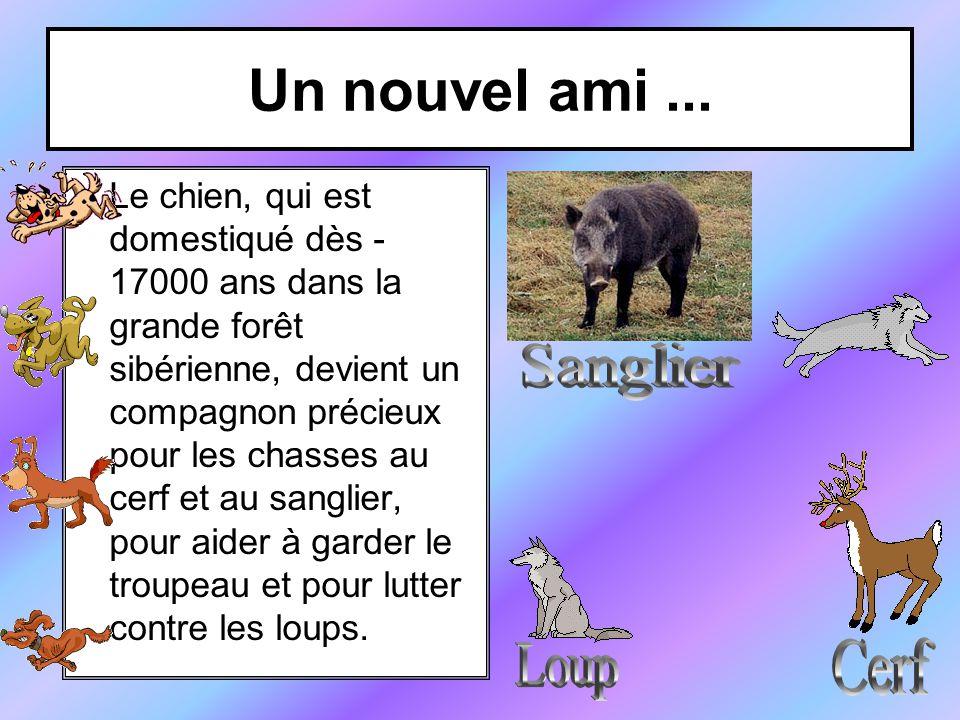 Un nouvel ami ... Sanglier Cerf Loup