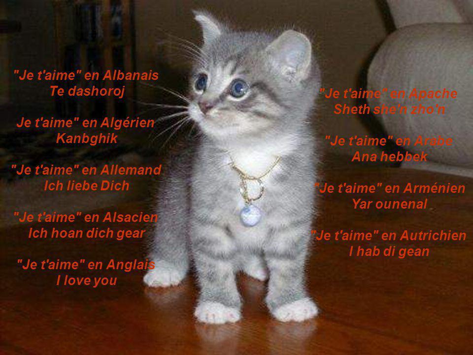 Je t aime en Albanais Te dashoroj Je t aime en Algérien Kanbghik