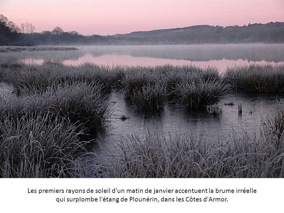 Les premiers rayons de soleil d un matin de janvier accentuent la brume irréelle qui surplombe l étang de Plounérin, dans les Côtes d Armor.