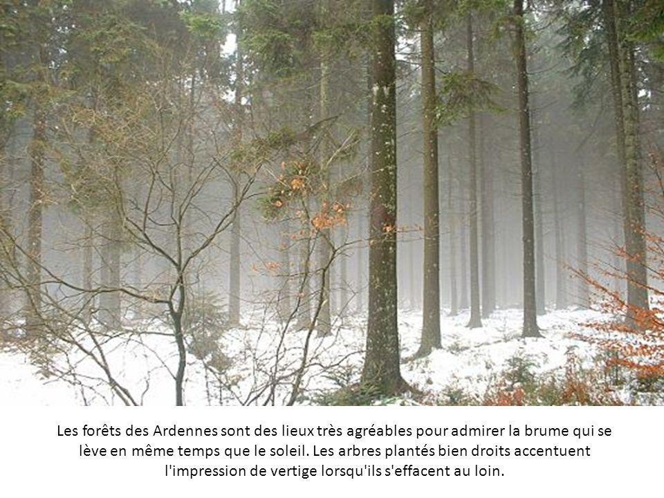 Les forêts des Ardennes sont des lieux très agréables pour admirer la brume qui se lève en même temps que le soleil.
