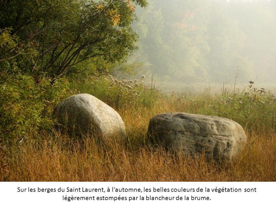 Sur les berges du Saint Laurent, à l automne, les belles couleurs de la végétation sont légèrement estompées par la blancheur de la brume.