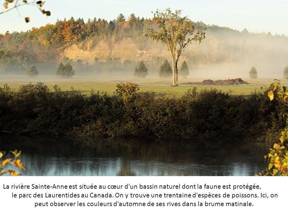 La rivière Sainte-Anne est située au cœur d un bassin naturel dont la faune est protégée,