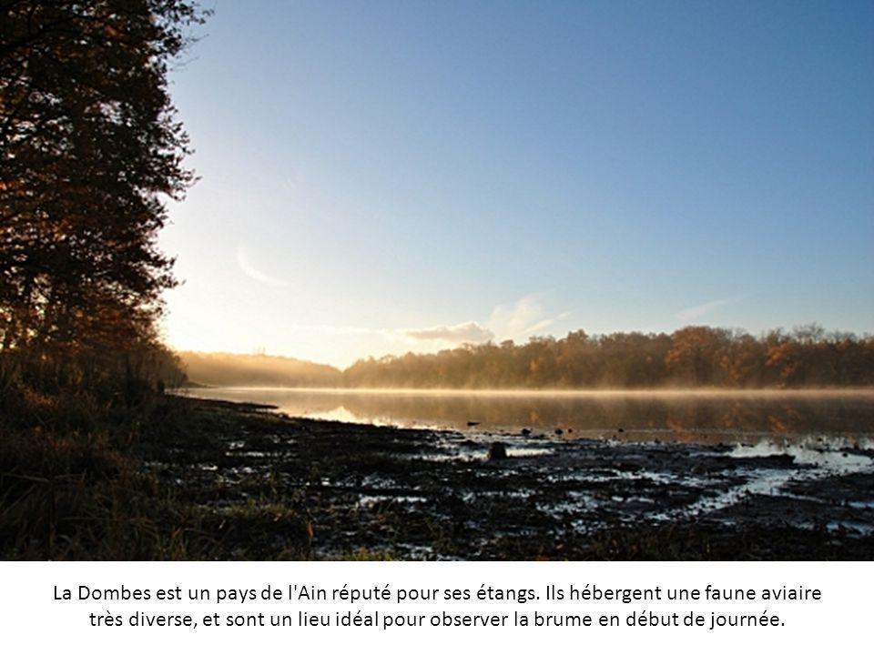 La Dombes est un pays de l Ain réputé pour ses étangs
