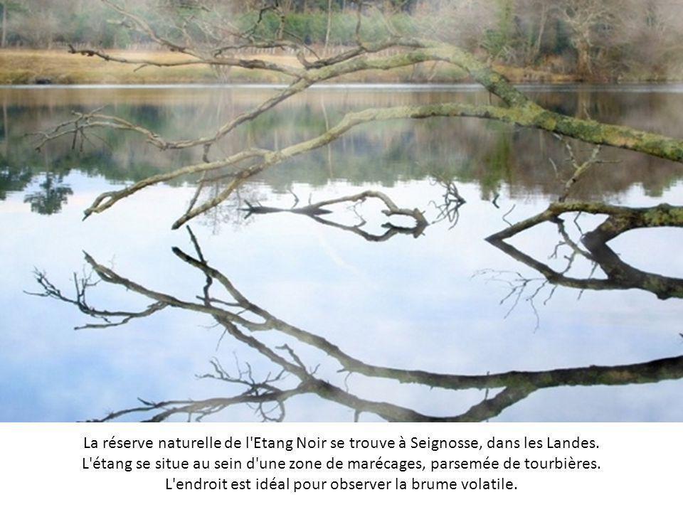 La réserve naturelle de l Etang Noir se trouve à Seignosse, dans les Landes.