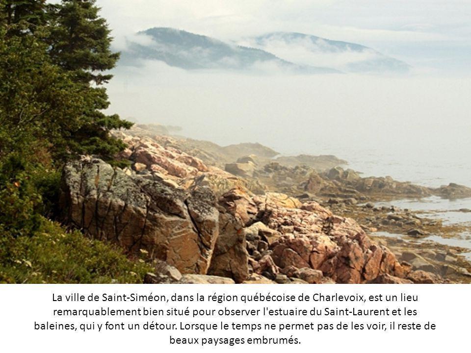 La ville de Saint-Siméon, dans la région québécoise de Charlevoix, est un lieu remarquablement bien situé pour observer l estuaire du Saint-Laurent et les baleines, qui y font un détour.