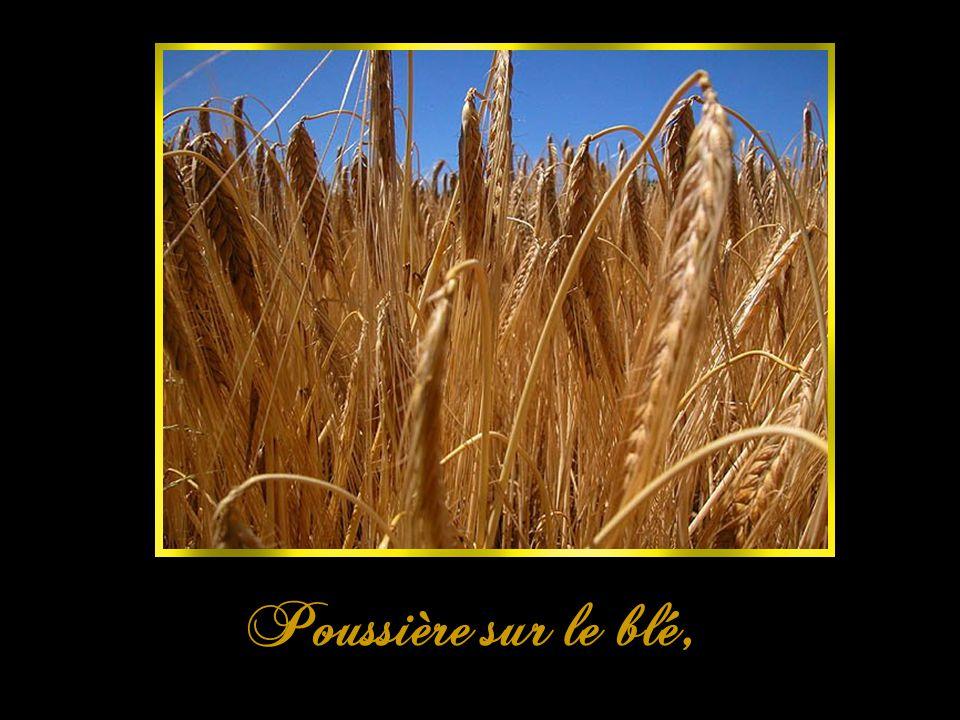 Poussière sur le blé,