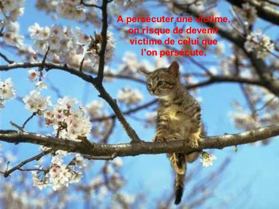A persécuter une victime, on risque de devenir victime de celui que l on persécute.