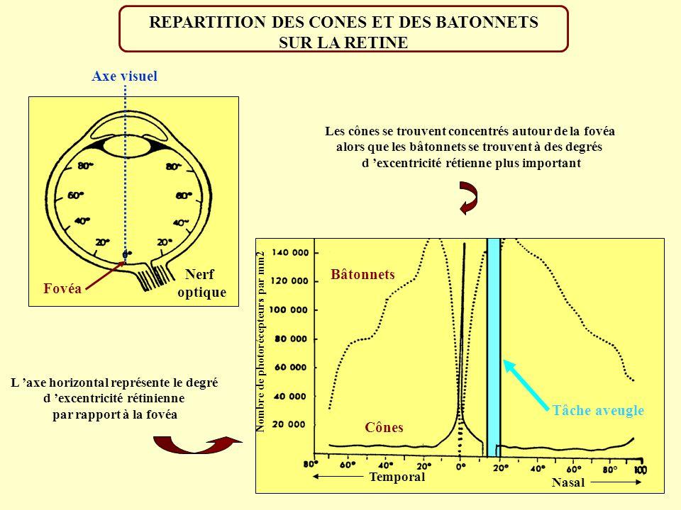 REPARTITION DES CONES ET DES BATONNETS SUR LA RETINE