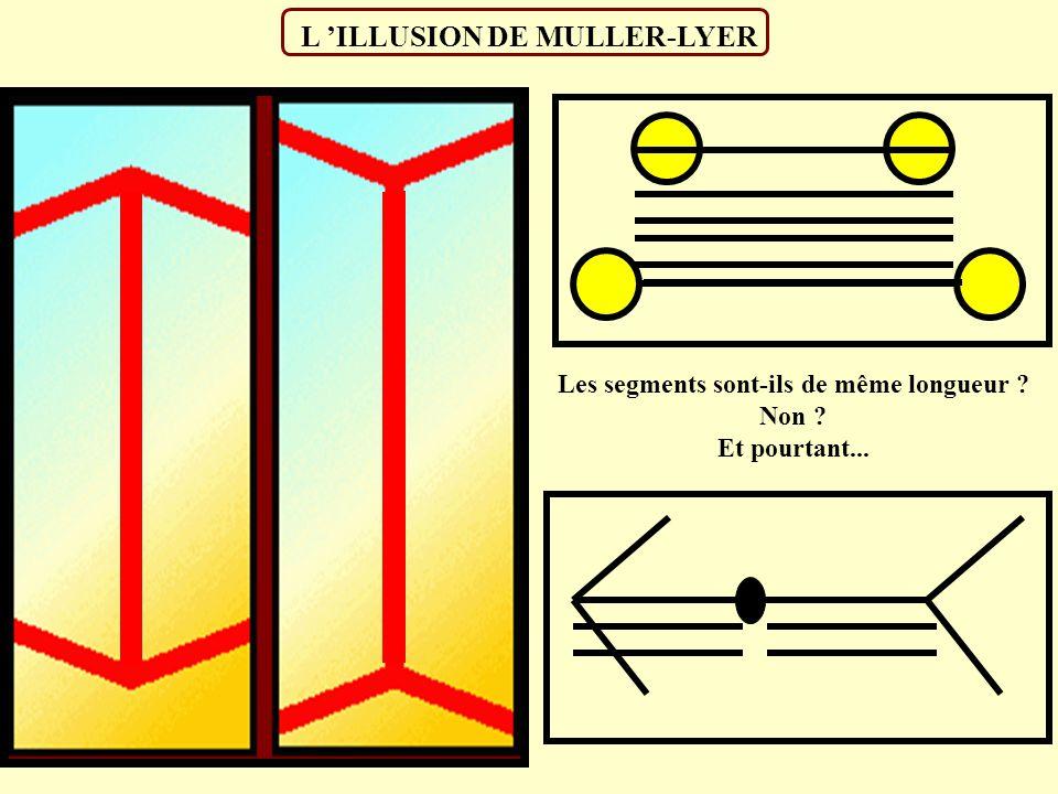 L 'ILLUSION DE MULLER-LYER