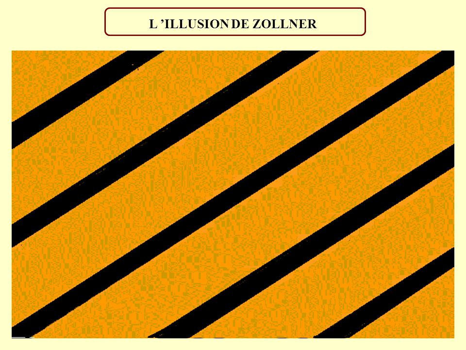 L 'ILLUSION DE ZOLLNER