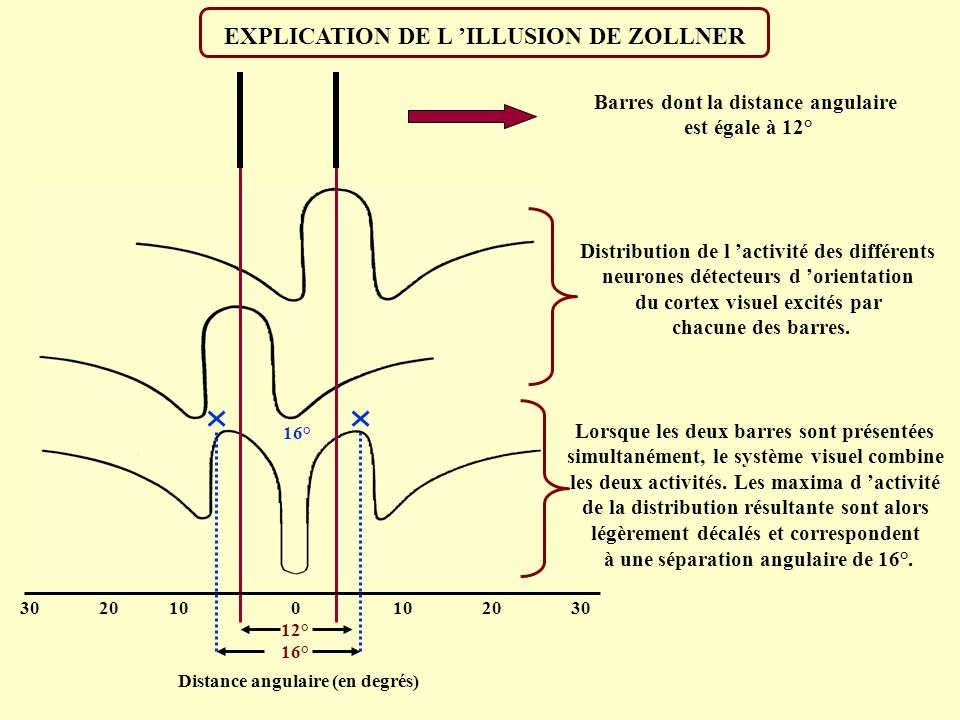 EXPLICATION DE L 'ILLUSION DE ZOLLNER