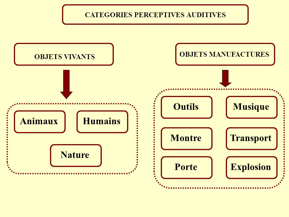 CATEGORIES PERCEPTIVES AUDITIVES