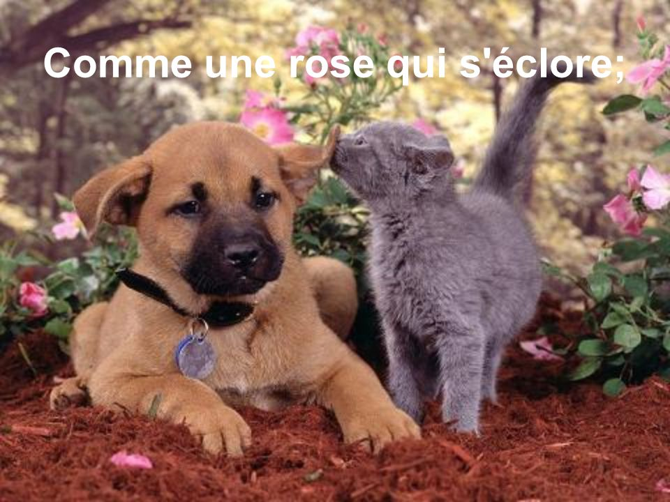 Comme une rose qui s éclore;