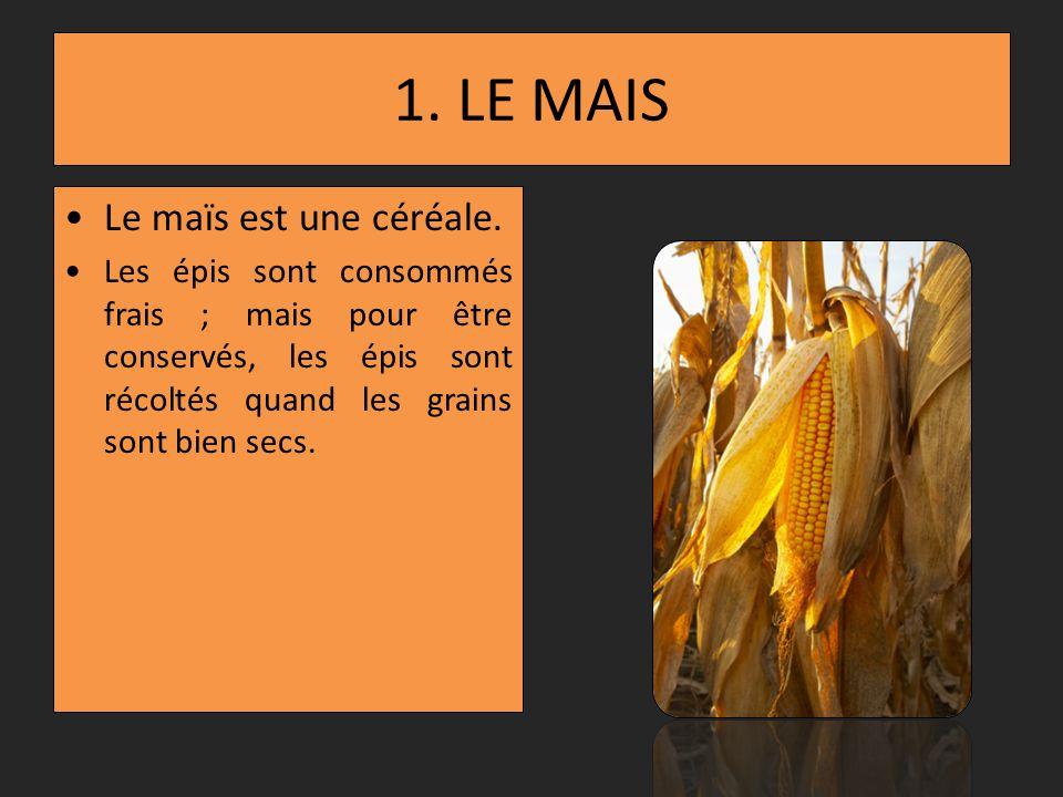 1. LE MAIS Le maïs est une céréale.
