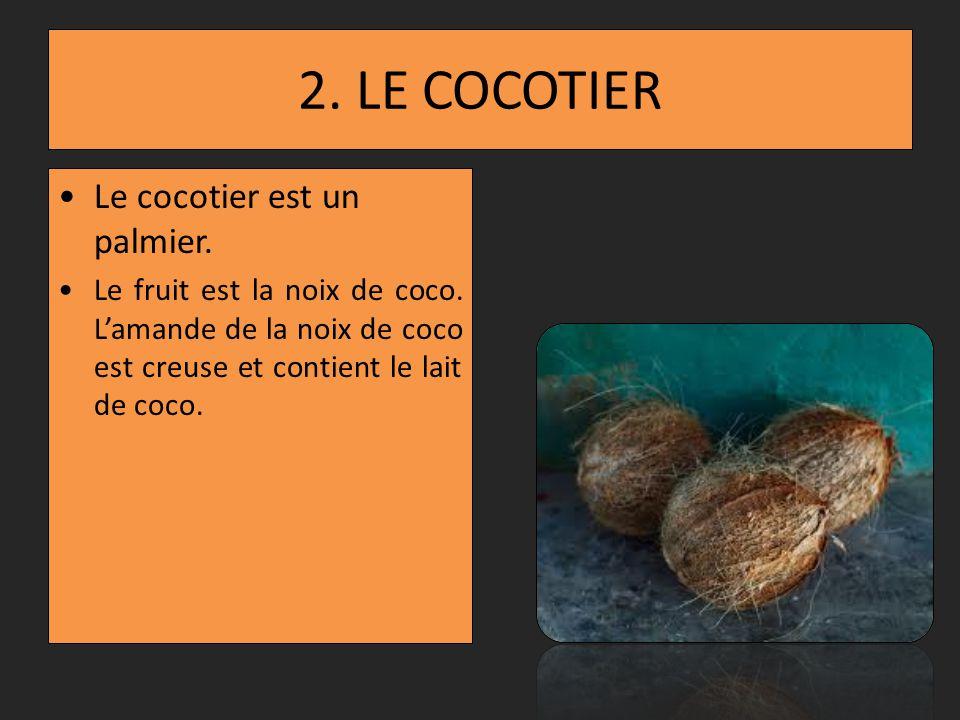 2. LE COCOTIER Le cocotier est un palmier.