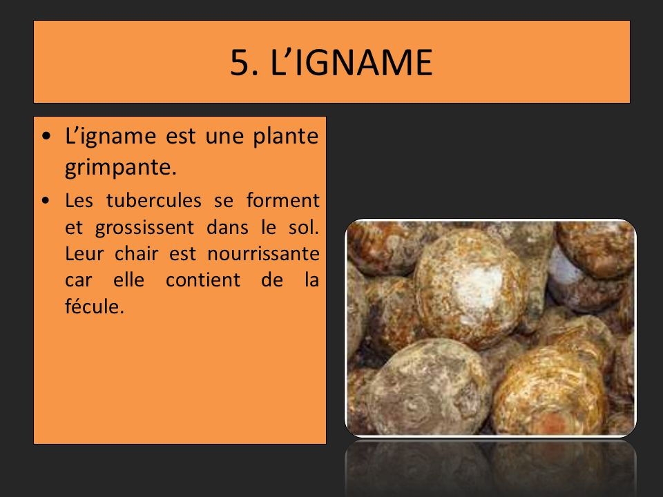 5. L'IGNAME L'igname est une plante grimpante.
