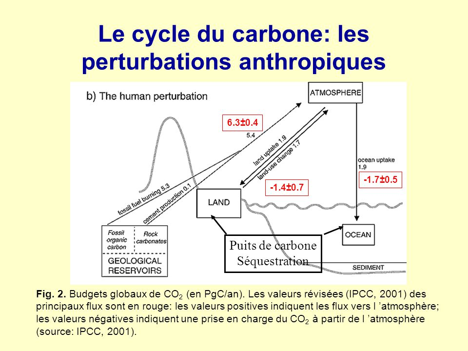 Le cycle du carbone: les perturbations anthropiques