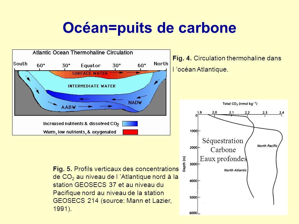 Océan=puits de carbone