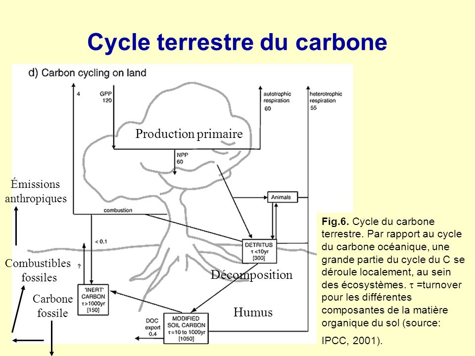 Cycle terrestre du carbone