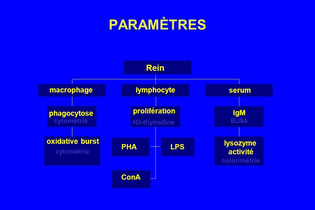 PARAMÈTRES Rein oxidative burst phagocytose macrophage PHA LPS ConA