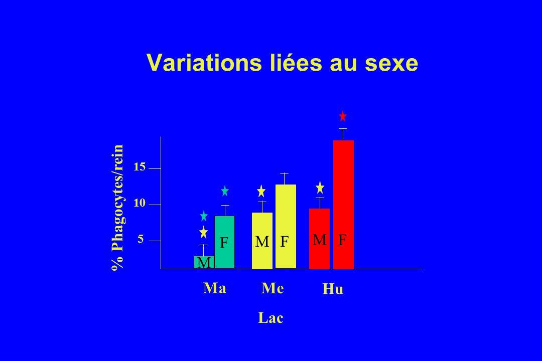 Variations liées au sexe