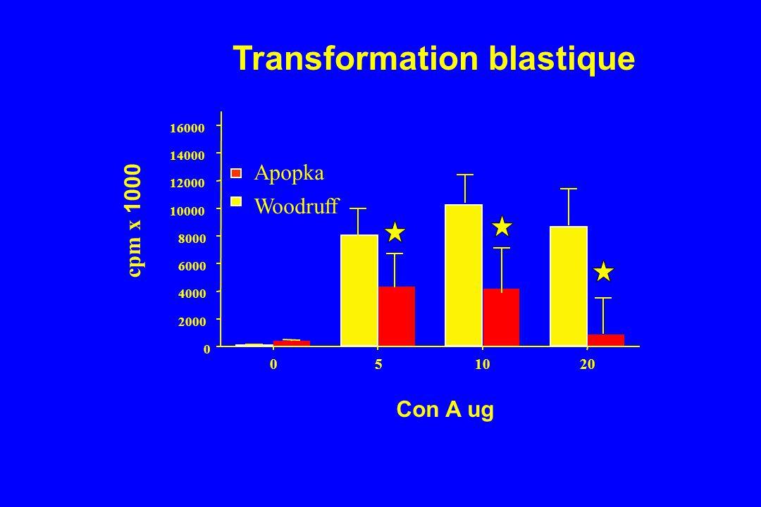 Transformation blastique