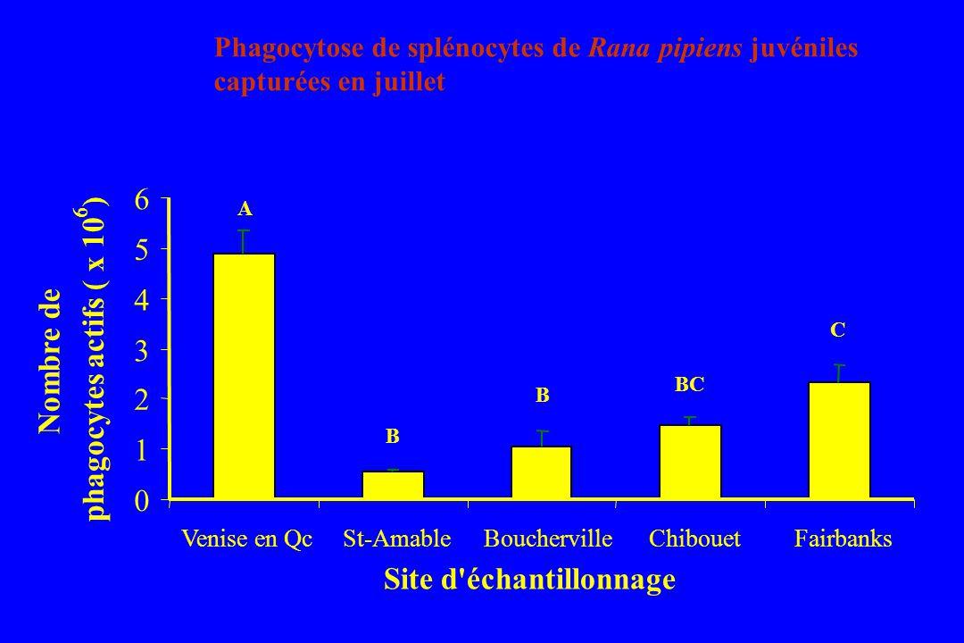 Site d échantillonnage Nombre de phagocytes actifs ( x 10 )