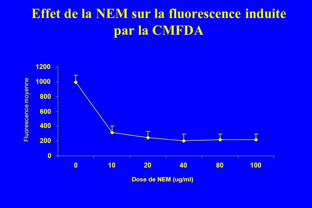 Effet de la NEM sur la fluorescence induite par la CMFDA