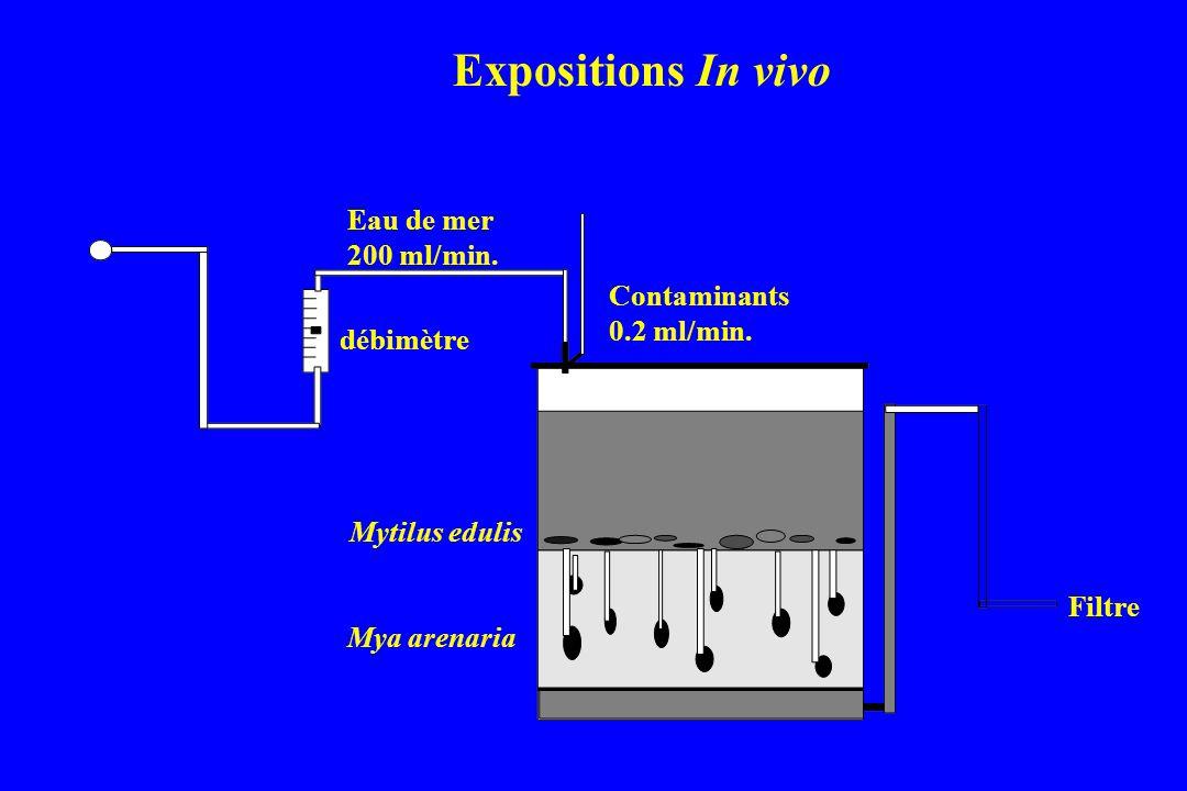 Expositions In vivo Eau de mer 200 ml/min. Contaminants 0.2 ml/min.