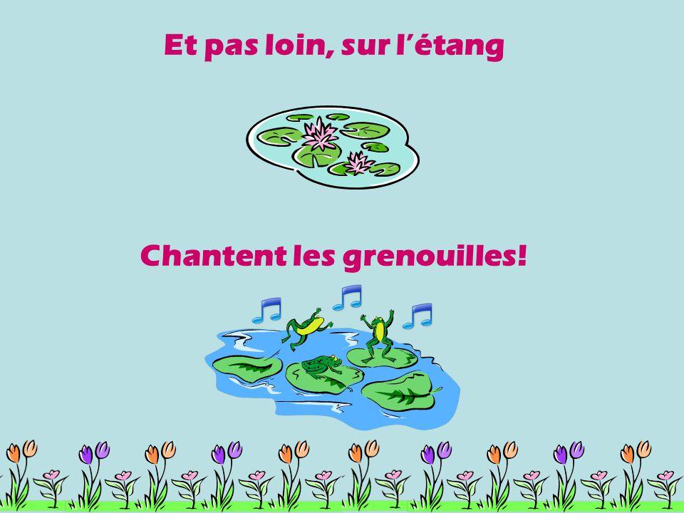 Chantent les grenouilles!
