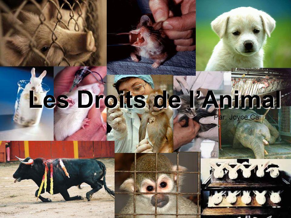 Les Droits de l'Animal Par: Joyce Cai