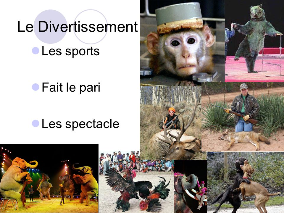 Le Divertissement Les sports Fait le pari Les spectacle