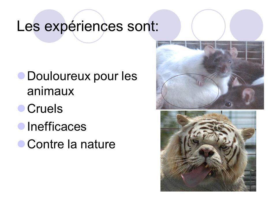 Les expériences sont: Douloureux pour les animaux Cruels Inefficaces