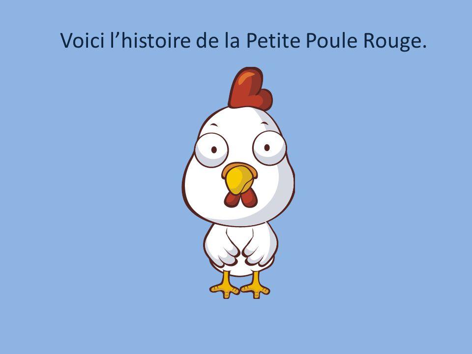 Voici l'histoire de la Petite Poule Rouge.