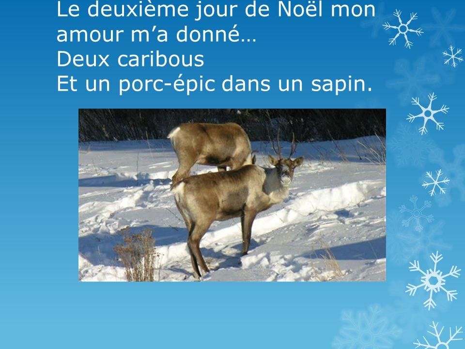 Le deuxième jour de Noël mon amour m'a donné… Deux caribous Et un porc-épic dans un sapin.