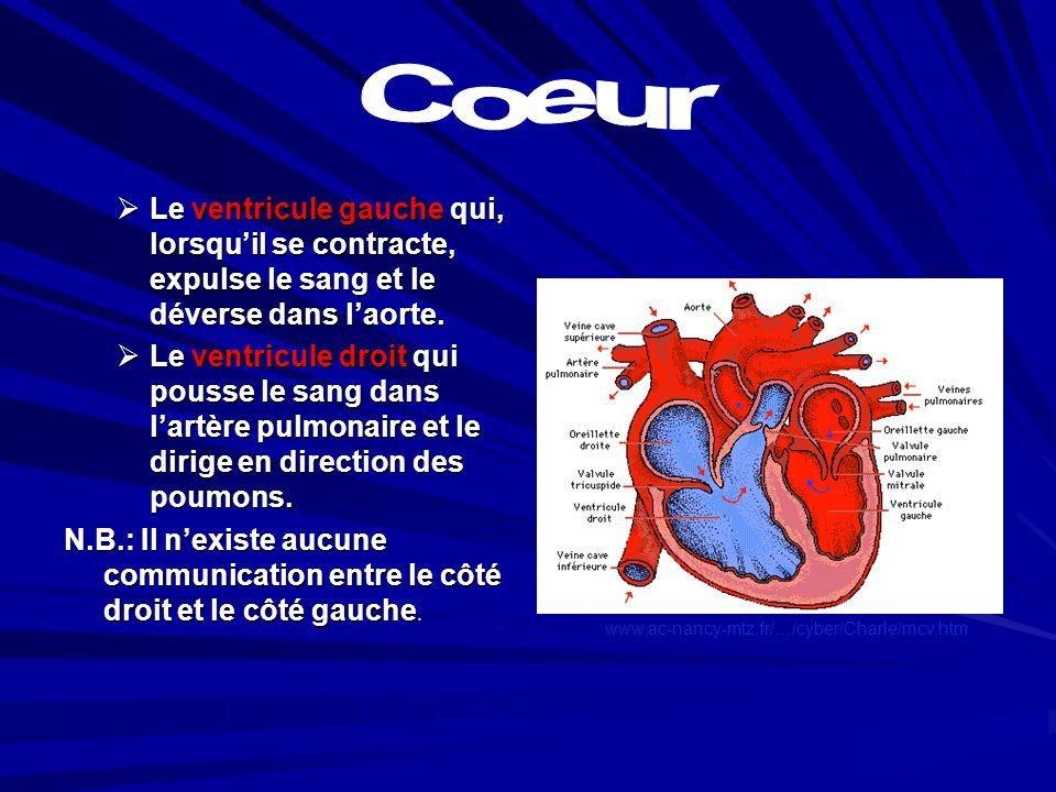 Coeur Le ventricule gauche qui, lorsqu'il se contracte, expulse le sang et le déverse dans l'aorte.