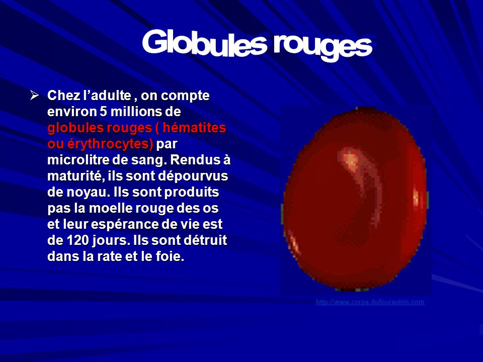 Globules rouges