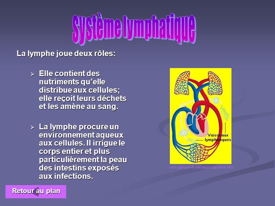 système lymphatique La lymphe joue deux rôles: